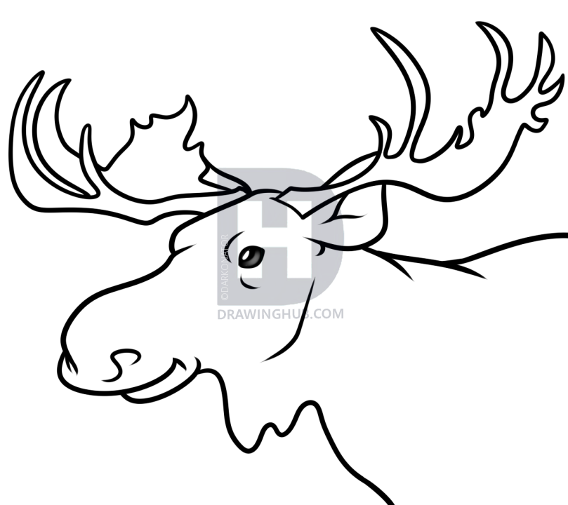 Moose drawing for kids at getdrawings free for personal use 809x720 how to draw a moose face group 56 thecheapjerseys Gallery
