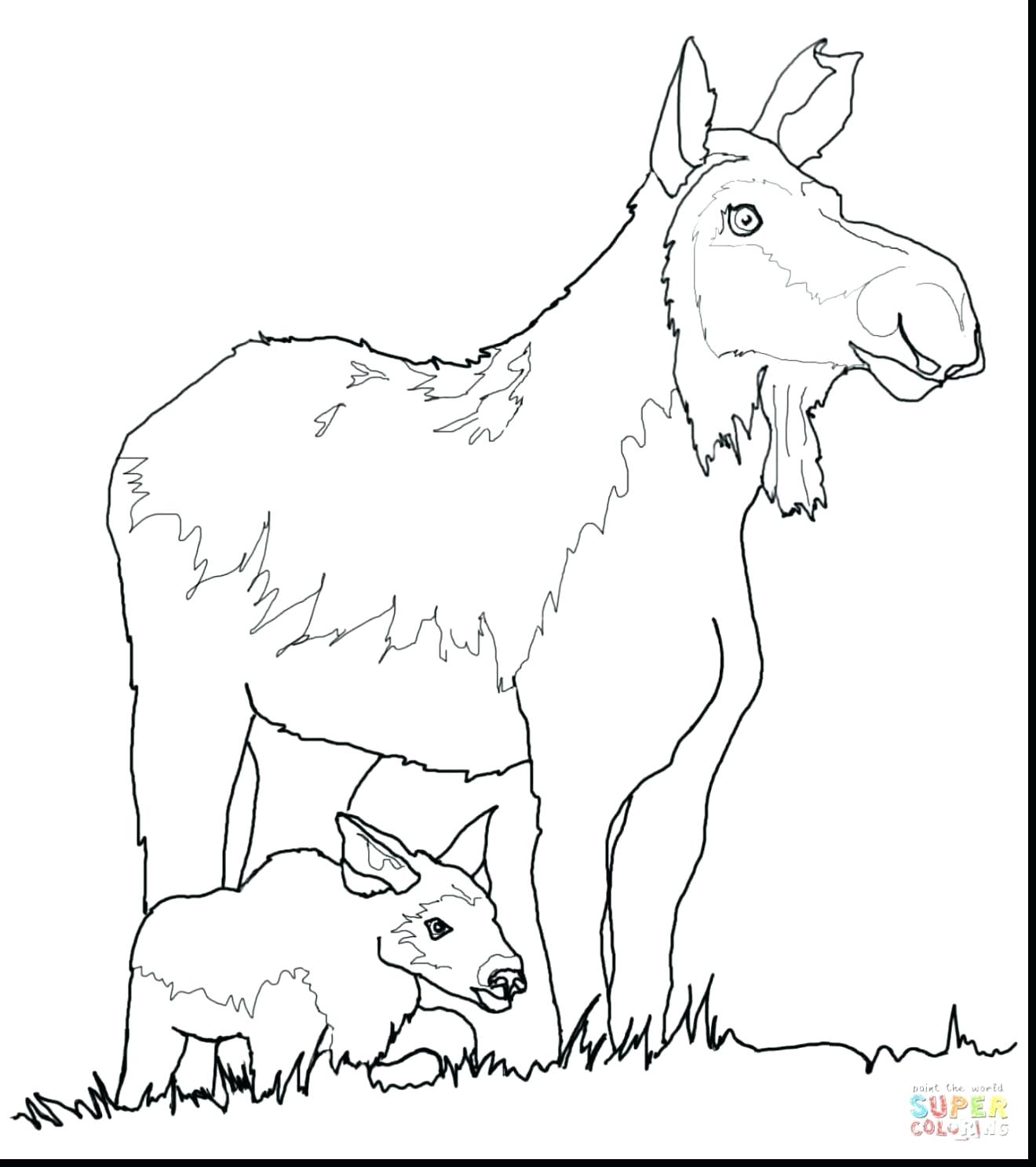 1320x1487 Coloring Deer Head Coloring Pages Fantastic Cow And Calf
