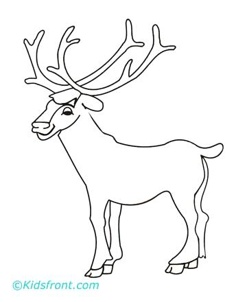 360x440 Elk Coloring Pages Moose Elk Coloring Page Pages Moose Coloring