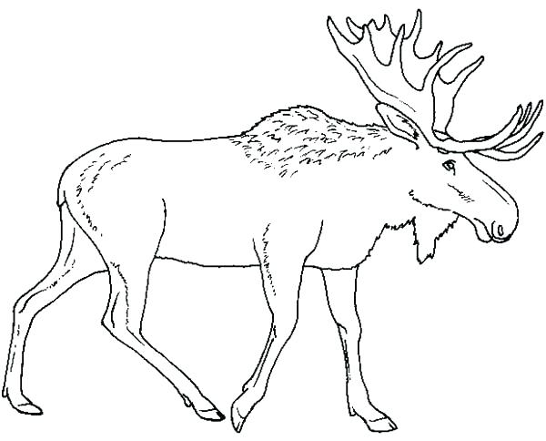 600x484 Moose Coloring Pages Click To See Printable Version Of Moose