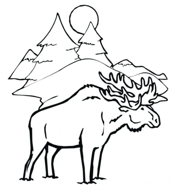 618x657 Moose Coloring Pages For Kids 117 Astounding Free Printable Moose