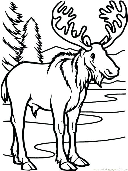 450x600 Moose Coloring Sheet Funny Moose Coloring Page Moose Head Coloring