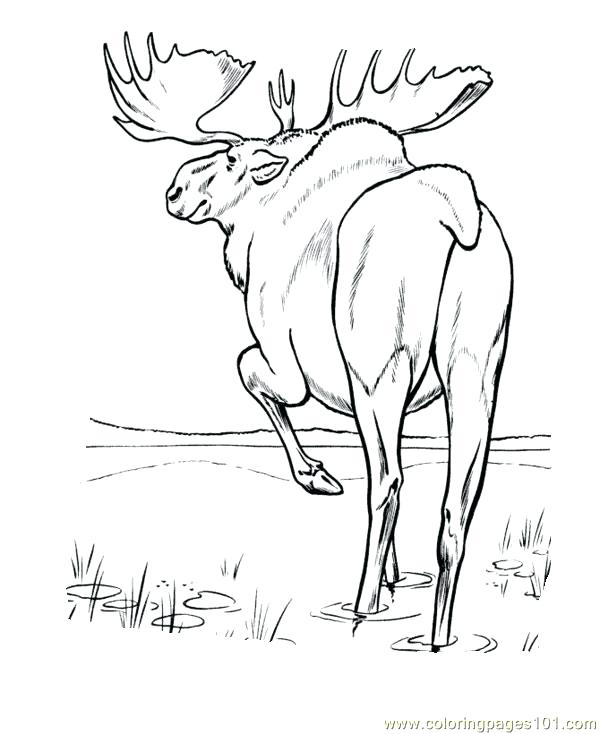 600x734 Best Of Moose Coloring Pages Pictures Moose Coloring Pages Moose