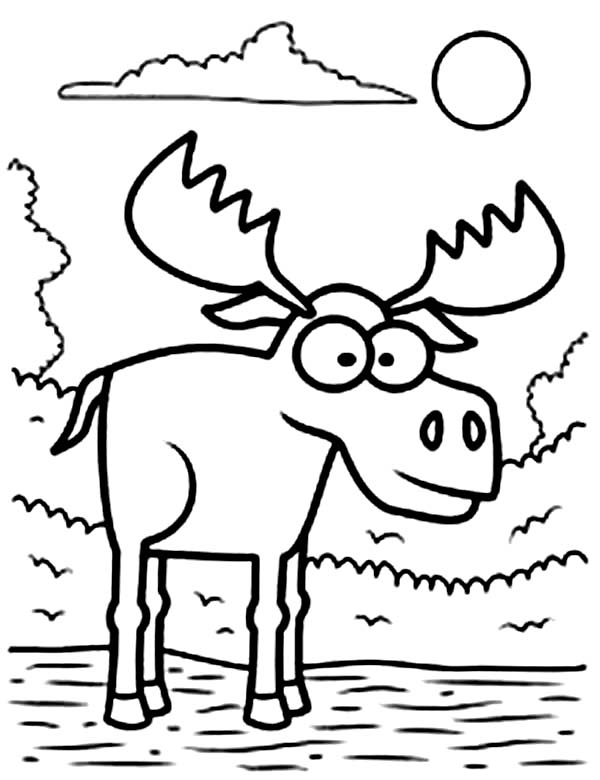 600x780 Big Eyed Moose Coloring Page