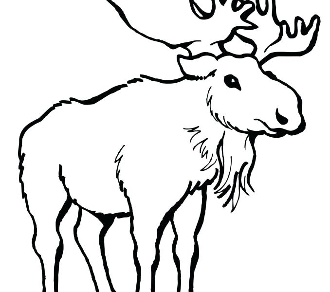 678x600 Moose Coloring Page Moose Coloring Pages Eastern Moose Coloring