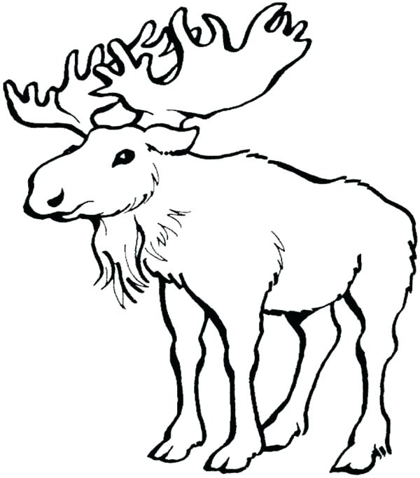 600x683 Moose Coloring Pages Moose Coloring Page Moose Head Coloring Pages