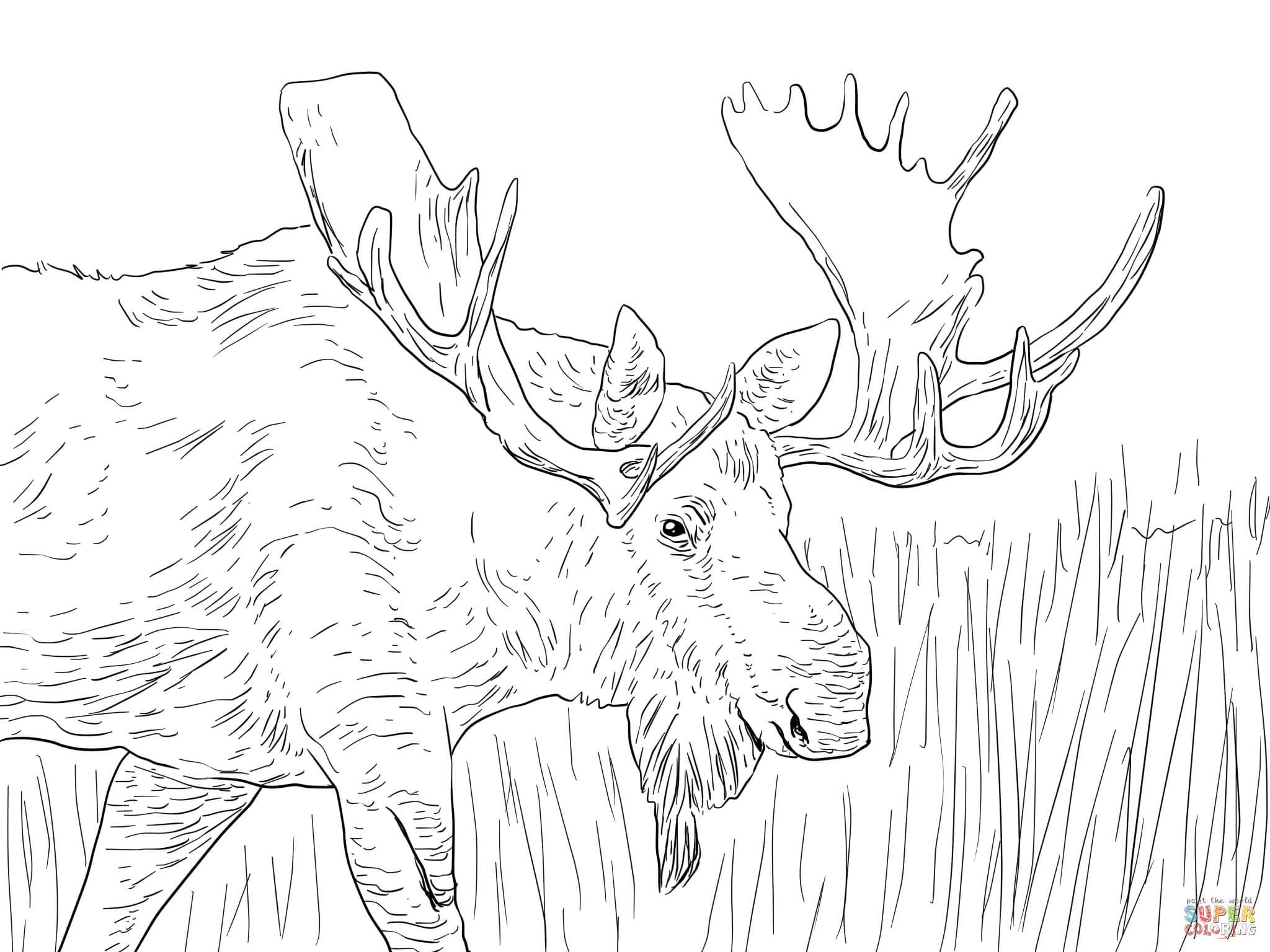 2048x1536 For Kid Moose Coloring Pages 43 On Line Drawings With Moose