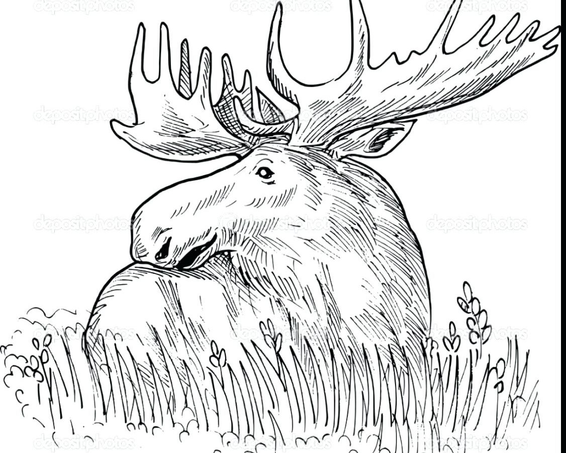 Moose Line Drawing at GetDrawings.com | Free for personal use Moose ...