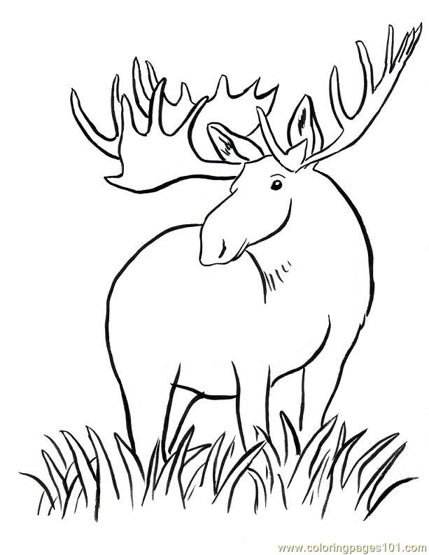 613x792 Moose Big Horn Coloring Page