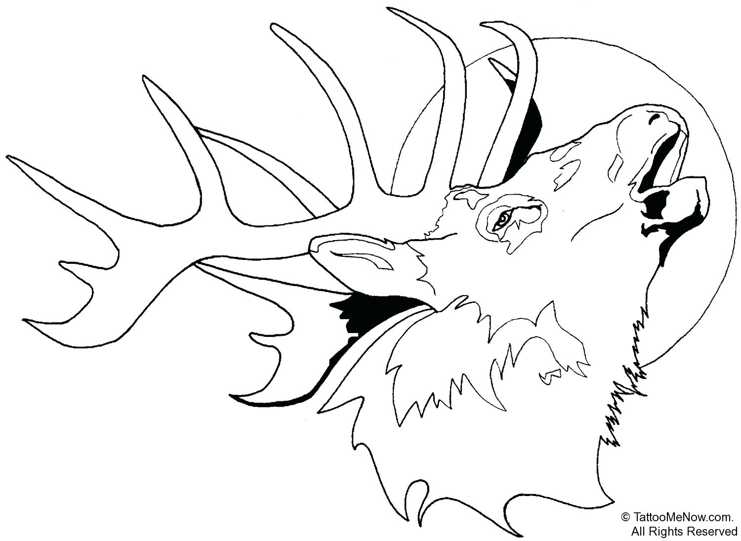 1500x1095 Coloring Moose Coloring Page