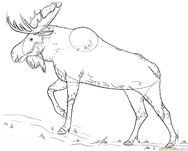 717x575 How To Draw A Moose Step By Step. Drawing Tutorials For Kids
