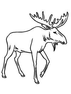 236x314 Moose.jpg