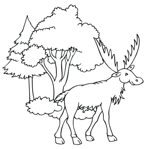 471x480 Best Of Moose Coloring Pages Pictures Moose Coloring Pages Moose