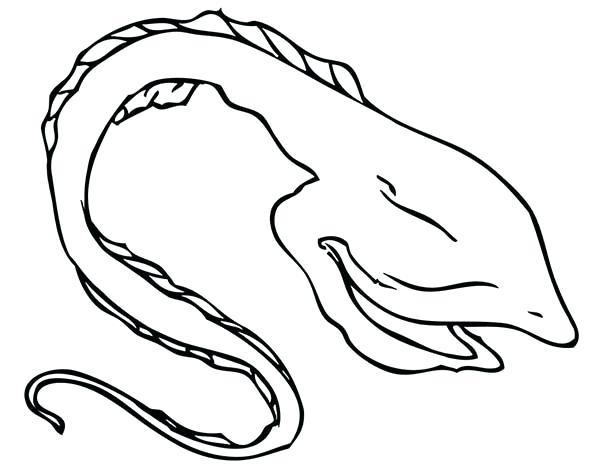 600x464 Eel Coloring Page Moray Eel Gulper Eel Coloring Page