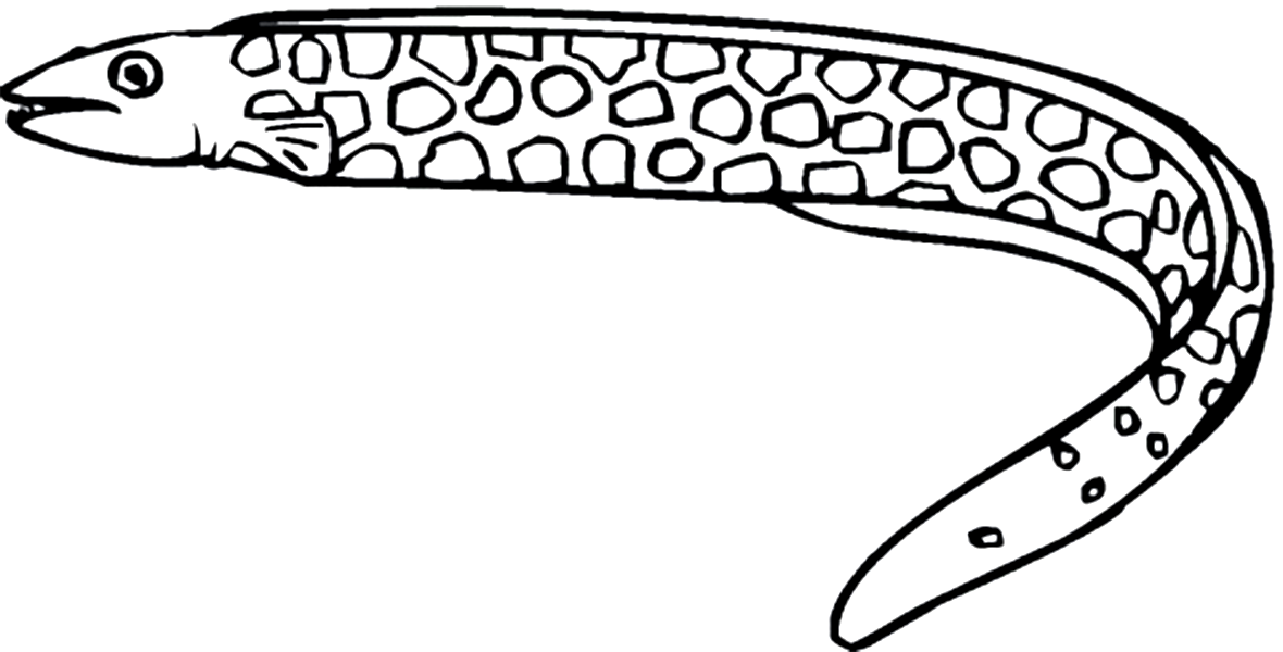 1180x600 Moray Eel Coloring Pages