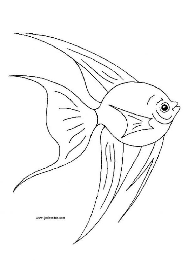 601x850 Moray Eel Coloring Pages