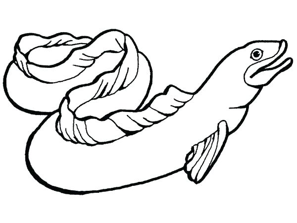 600x450 Sea Animal Coloring Pages Eel Coloring Pages Moray Eel Slippery