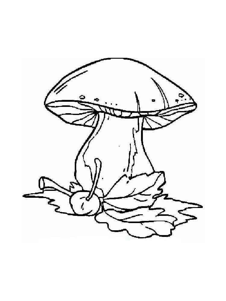 morel mushroom drawing at getdrawings com free for personal use