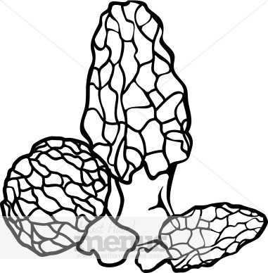 381x388 Morel Mushrooms Clipart Vegetable Clipart