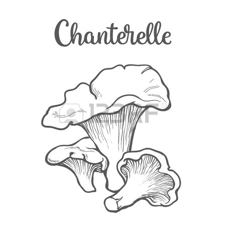 450x450 Set Of Morel Edible Mushrooms Sketch Style Vector Illustration