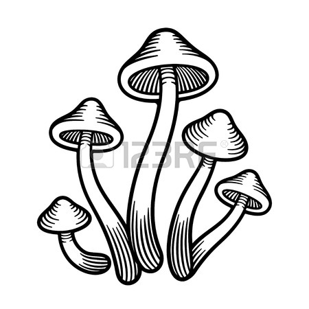 450x450 323 Hand Drawn Fungi Stock Vector Illustration And Royalty Free