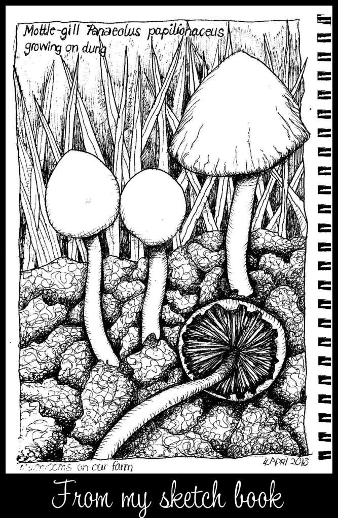 667x1023 48 Best Fungi Images On Fungi, Mushrooms And Mushroom Art