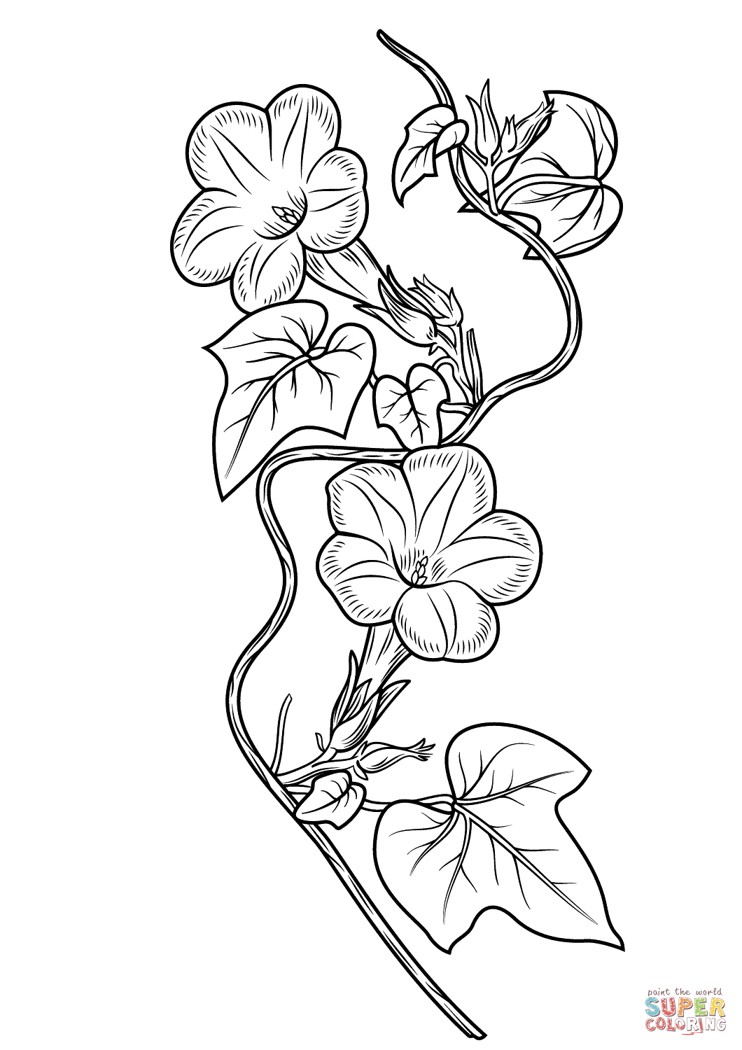 1060x1500 Morning Glory Flower Drawing Morning Glory Flower Coloring Pages