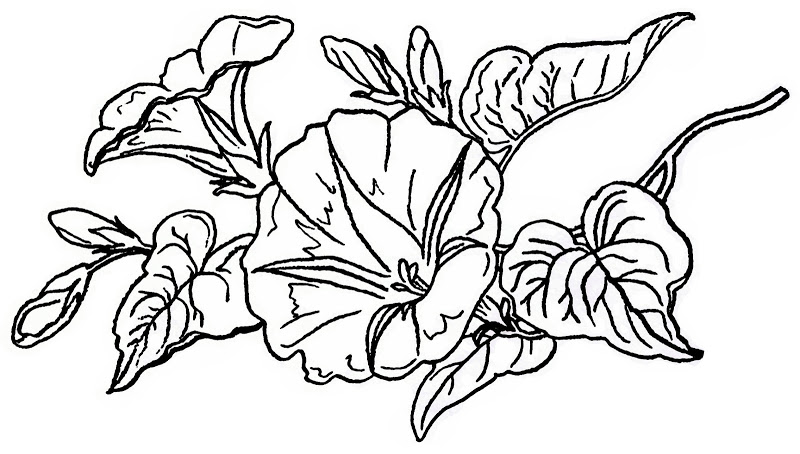 800x454 vintage flower coloring pages printable coloring for kids