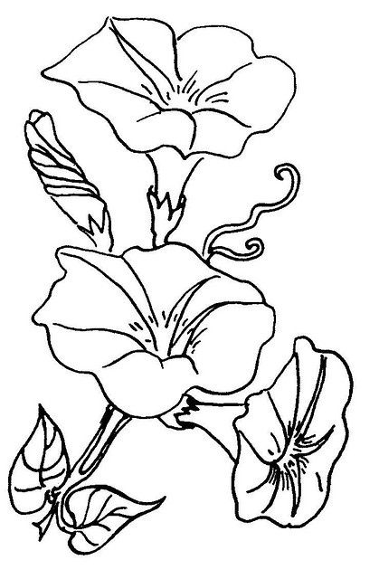 419x640 Morning Glory Coloring Pages Flowers 5 Morning Glory By Love