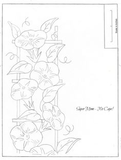 236x313 Morning Glory And Butterfly Illustration Morning Glory Artill