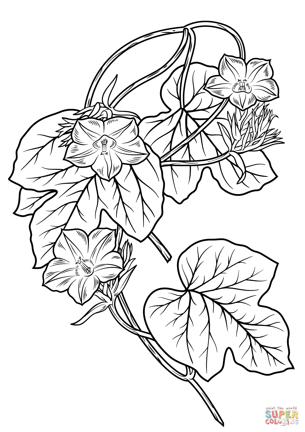 1060x1500 Morning Glory Flower Drawing Morning Glory Flower Coloring Page