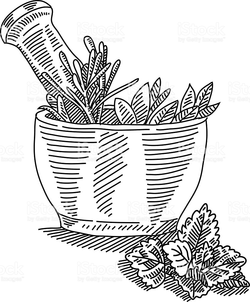 847x1024 Line Drawing Of Mortar With Herbals. It Is Single Layered