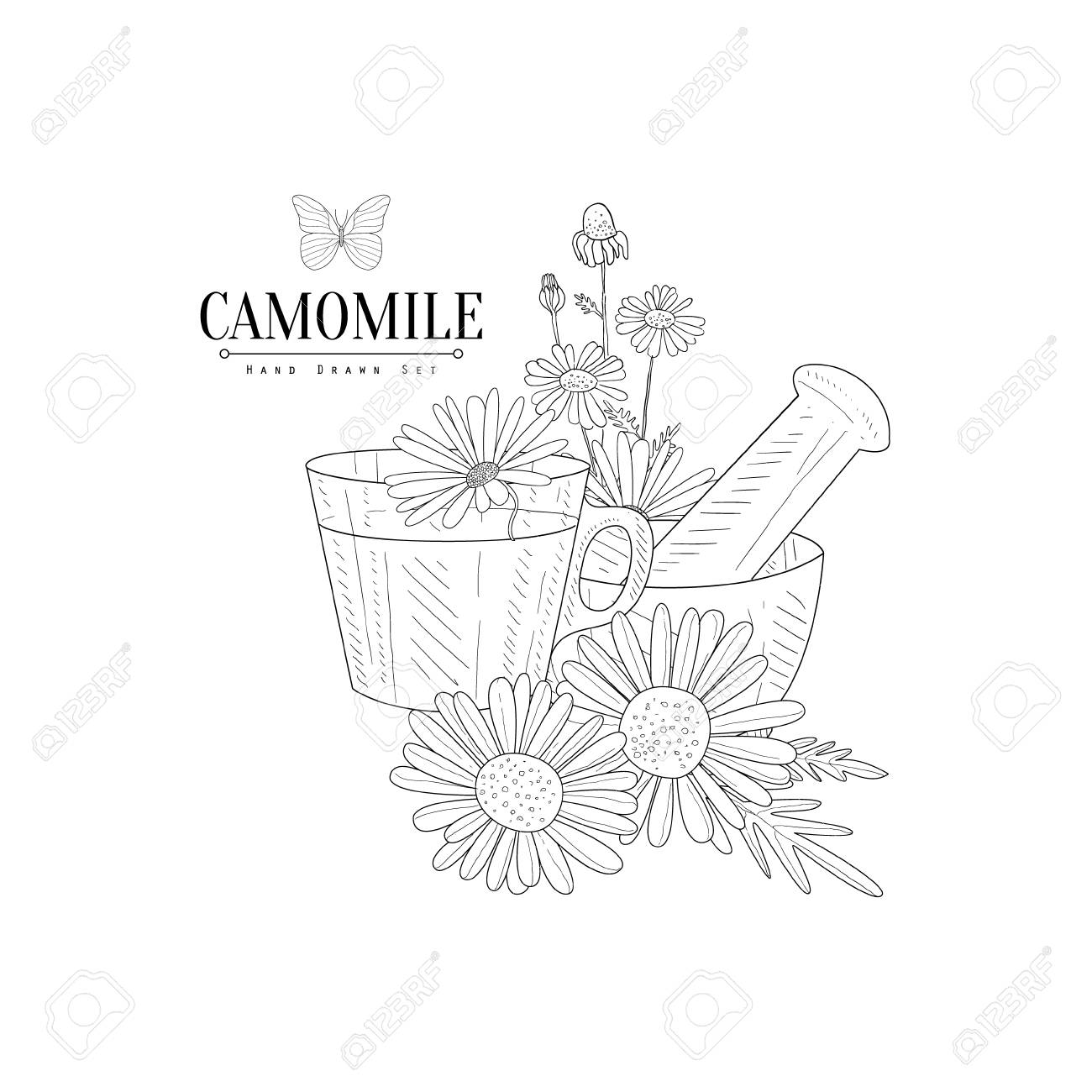 1300x1300 Camomile Tea, Pestle And Mortar Hand Drawn Realistic Detailed