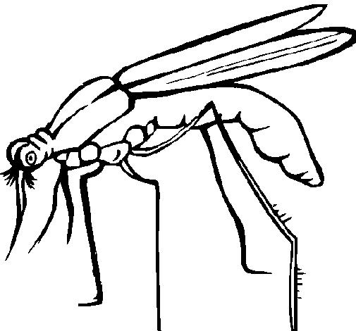 505x470 Mosquito