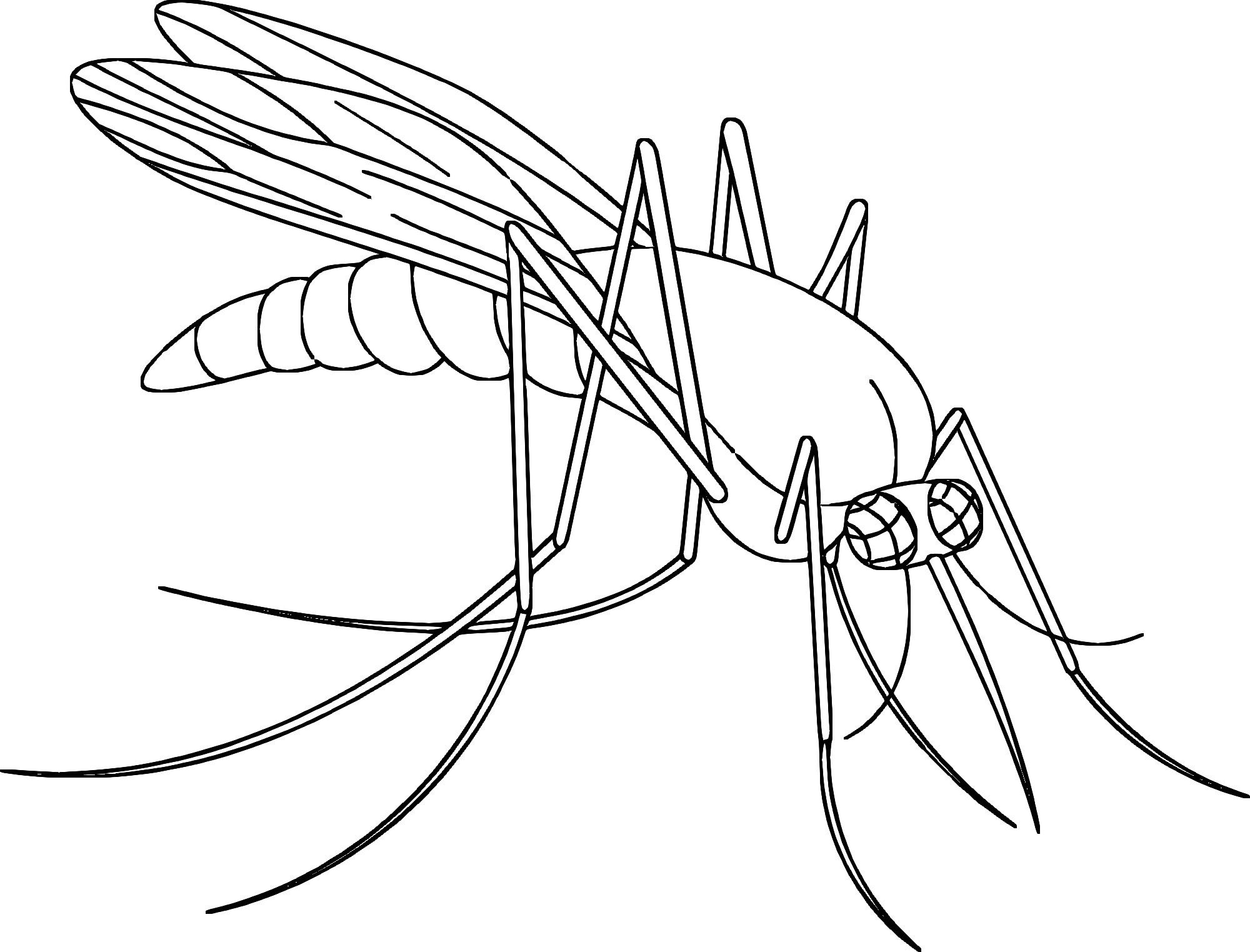 2000x1523 Mosquito Coloring Page Free Draw To Color