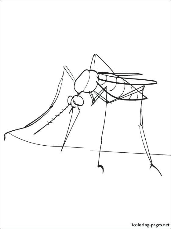 560x750 Mosquito Coloring Page Mosquito Picture Mosquito Larvae Coloring