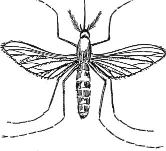 332x303 Mosquito 2