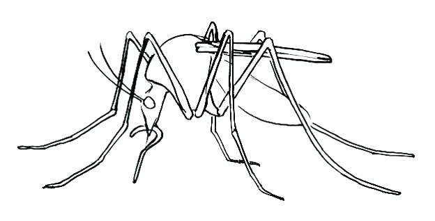 mosquito drawing at getdrawings com free for personal use mosquito