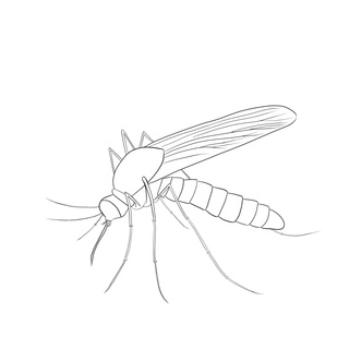 320x320 And Here It Is. My Firs Drawing On Pw. I Plan To Colour It In