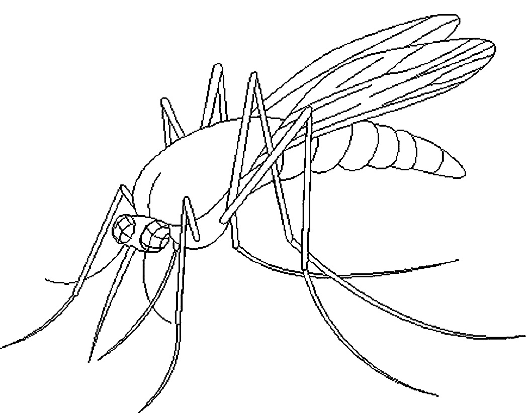 1050x822 Free Printable Mosquito Coloring Pages For Kids