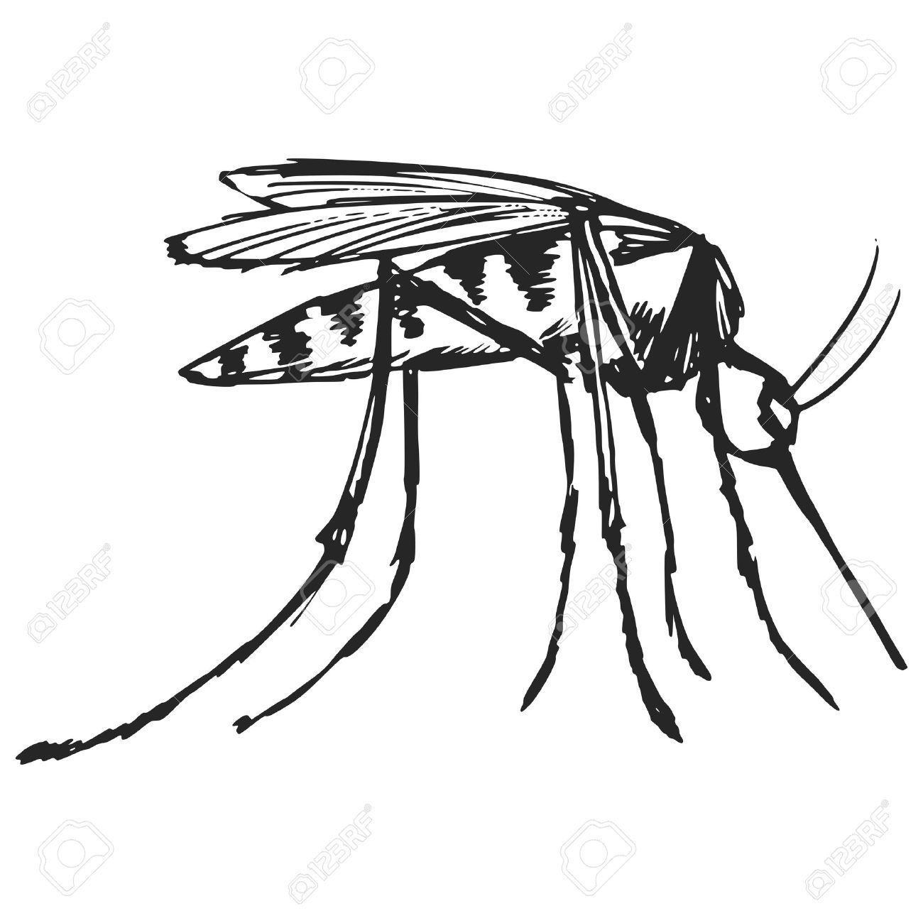 1300x1300 Hand Drawn, Sketch, Cartoon Illustration Of Mosquito Royalty Free