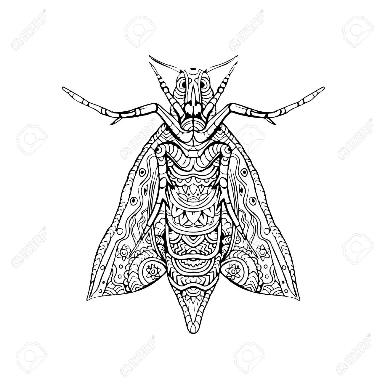 1300x1300 Illustration Of An Elephant Hawk Moth Done In Hand Sketch Drawing