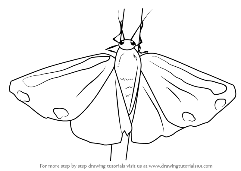 800x567 Learn How To Draw A Cinnabar Moth (Insects) Step By Step Drawing