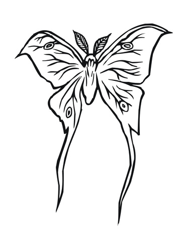 360x480 Luna Moth Coloring Page Free Printable Coloring Pages