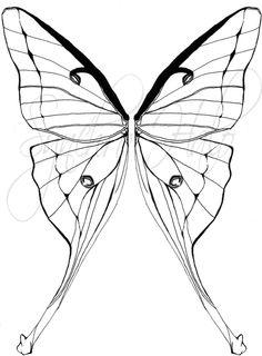 236x320 Luna Moth Drawing Art And Artsy Things Moth