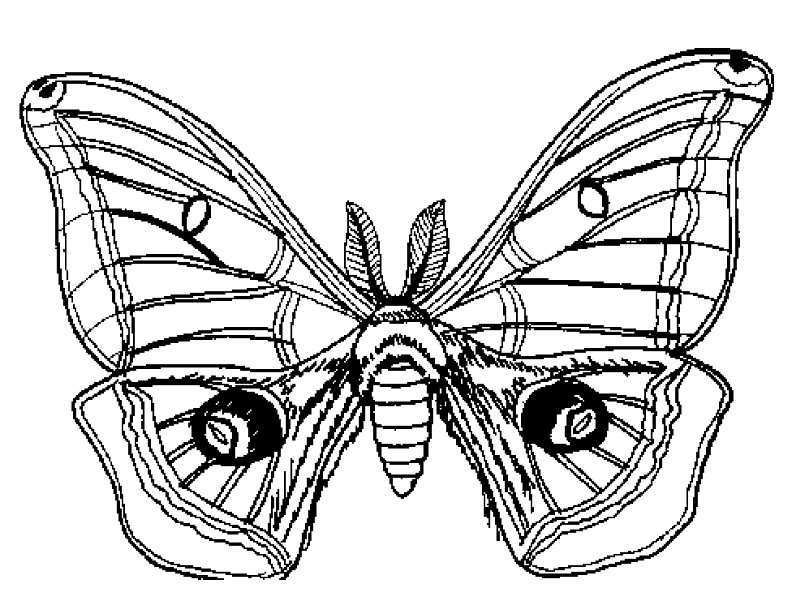792x612 Moth Coloring Pages