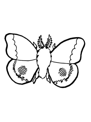 360x480 Nocturnal Moth Coloring Page Free Printable Coloring Pages