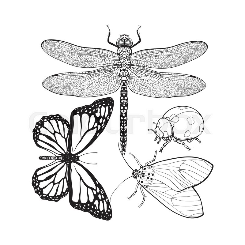 800x800 Set Of Insects Like Dragonfly, Butterfly, Ladybird And Moth