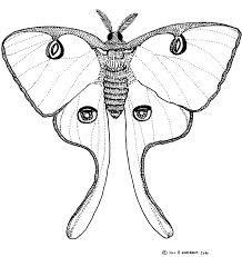 218x231 The Best Moth Drawing Ideas On Moth Tattoo, Luna
