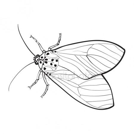 450x450 Top View Of Gray Moth, Isolated Sketch Style Illustration Stock